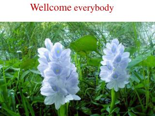 Wellcome  everybody