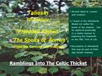 Ramblings Into The Celtic Thicket