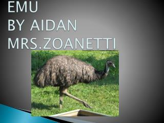 EMU BY AIDAN MRS.ZOANETTI