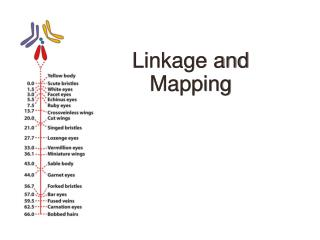 Linkage and Mapping