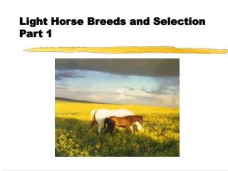 Light Horse Breeds and Selection Part 1