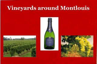 Vineyards around Montlouis