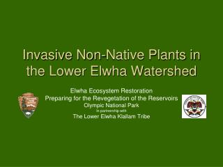 Invasive Non-Native Plants in the Lower Elwha Watershed