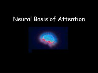 Neural Basis of Attention