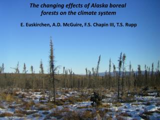 The changing effects of Alaska boreal  forests on the climate system