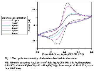 Fig  1. The cyclic voltammetry of albumin adsorbed Au electrode