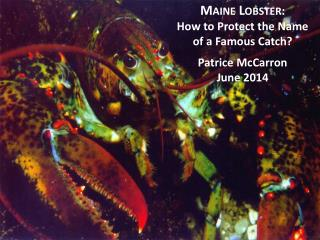 Maine Lobster :  How to Protect the Name  of a Famous Catch? Patrice McCarron June 2014