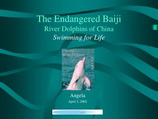 The Endangered Baiji River Dolphins of China Swimming for Life