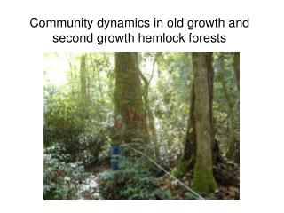 Community dynamics in old growth and second growth hemlock forests