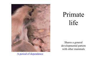 Primate life Shares a general developmental pattern with other mammals
