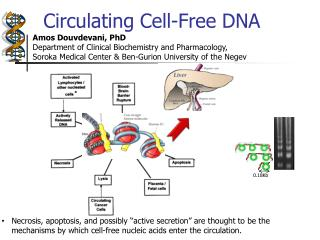 Circulating  Cell-Free DNA