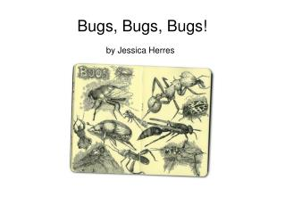 Bugs, Bugs, Bugs!