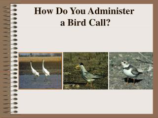 How Do You Administer  a Bird Call?