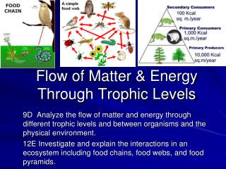 Flow of Matter & Energy Through Trophic Levels