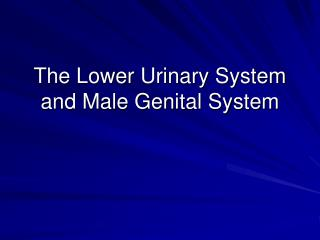 The Lower Urinary System and Male Genital System