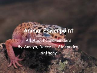 Animal  Powerpoint