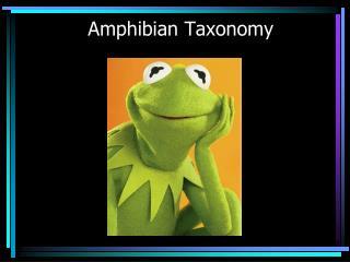Amphibian Taxonomy