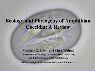 Ecology and Phylogeny of Amphibian Coccidia: A Review