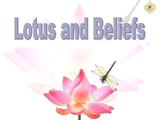 Lotus and Beliefs