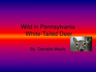 Wild in Pennsylvania  White-Tailed Deer