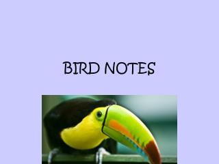 BIRD NOTES