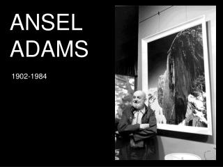 ansel adams rose and driftwood analysis