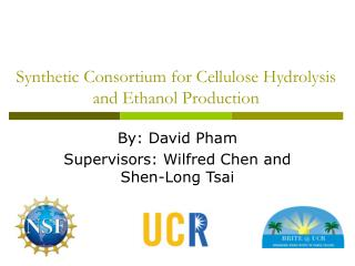 Synthetic Consortium for Cellulose Hydrolysis and Ethanol Production