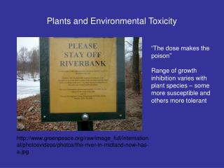 Plants and Environmental Toxicity