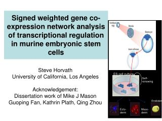 Signed weighted gene co-expression network analysis of transcriptional regulation in murine embryonic stem cells