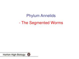 Phylum Annelids - The Segmented Worms