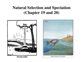 Natural Selection and Speciation (Chapter 19 and 20)