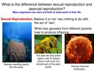 What is the difference between sexual reproduction and asexual reproduction?