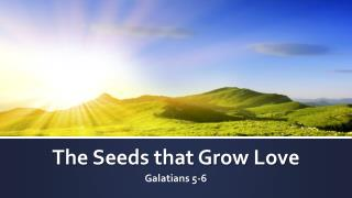 The Seeds that Grow Love