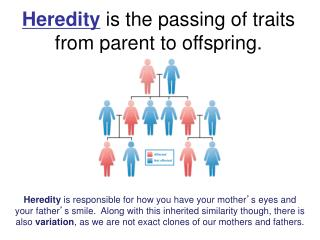 Heredity  is the passing of traits from parent to offspring.