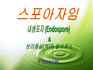 내생포자 ( Endospore)
