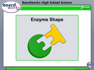 What are enzymes made of?