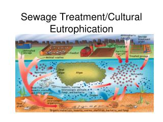 Sewage Treatment/Cultural Eutrophication