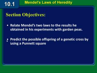 Relate Mendel's two laws to the results he obtained in his experiments with garden peas.