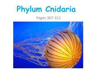 PPT - PHYLUM CNIDARIAN PowerPoint Presentation - ID:194670