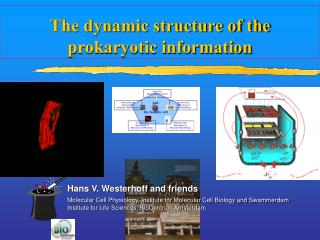 The dynamic structure of the prokaryotic information