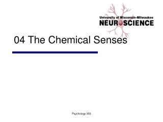 04 The Chemical Senses