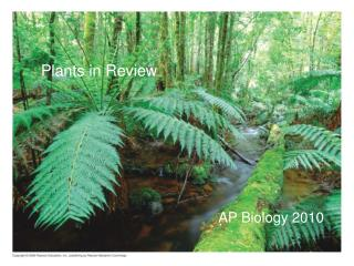 Plants in Review