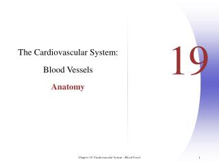 The Cardiovascular System:  Blood Vessels Anatomy