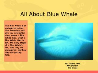 All About Blue Whale