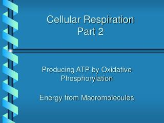Cellular Respiration Part 2