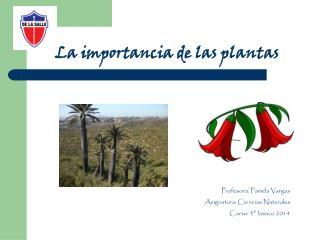 La importancia de las plantas