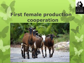 First female production     				cooperation