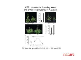 RH Wang  et al. Nature 458 , 1-5 (2009) doi:10.1038/nature07988