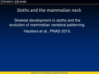 Sloths and the mammalian neck