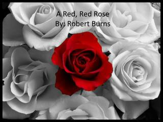 A Red, Red Rose By: Robert Burns